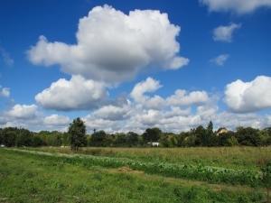 cloudsoverfield.jpg